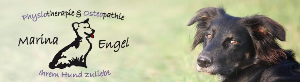 Hundephysiotherapie & Osteopathie Marina Engel